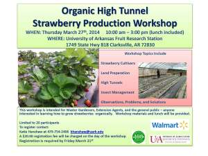 Organic StrawberryWorkshop flyer